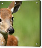 What A Face 1 Acrylic Print