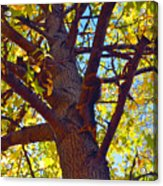 What Are You Lookin At Acrylic Print