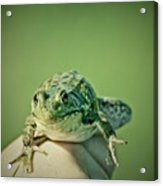 What Are You Looking At Acrylic Print