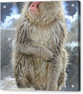 What Did You Just Say? Acrylic Print