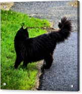 What Was That? Acrylic Print