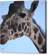 Whatcha Looking At? Acrylic Print