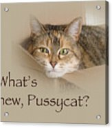 What's New Pussycat - Lily The Cat Acrylic Print