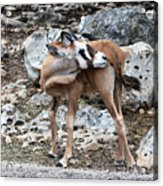 Whats That Smell Acrylic Print