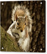 What's Up? Acrylic Print