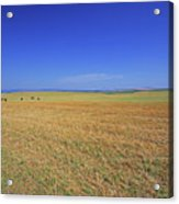 Wheat Field After Harvest Acrylic Print