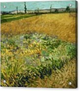 Wheat Field With Alpilles Foothills In The Background At Wheat Fields Van Gogh Series, By Vincent  Acrylic Print