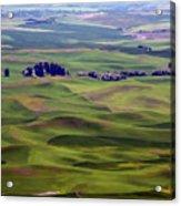 Wheat Fields Of The Palouse - Eastern Washington State Acrylic Print