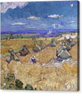 Wheat Fields With Reaper, Auvers Acrylic Print