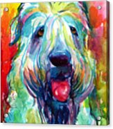 Wheaten Terrier Dog Portrait Acrylic Print