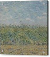 Wheatfield With Partridge Paris, June - July 1887 Vincent Van Gogh 1853 - 1890 Acrylic Print