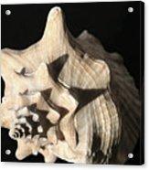 Whelk Acrylic Print