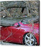 When A Tree Falls Acrylic Print