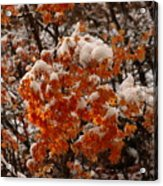 When Fall Meets Winter Acrylic Print