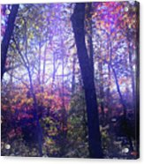 When Forests Dream Acrylic Print