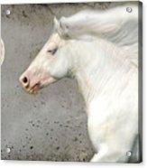 When Horses Dream Acrylic Print