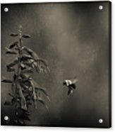 When Once A Bee Flew Acrylic Print