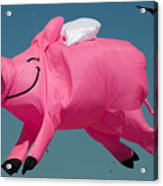 When Pigs Fly Acrylic Print