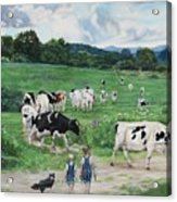 When The Cows Come Home, It's Milking Time Acrylic Print