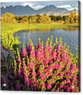 When The Rains Come In The Desert So Do The Blooms Acrylic Print