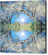 When Trees Embrace Acrylic Print