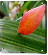 When Two Leaves Meet Acrylic Print
