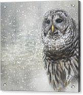 When Winter Calls Owl Art Acrylic Print