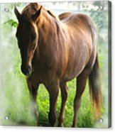 When You Dream Of Horses Acrylic Print