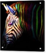 When Zebras Dream 7d8908 Square Acrylic Print