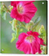 Where Flowers Bloom So Does Hope Acrylic Print
