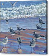 Where Seagulls Play Acrylic Print