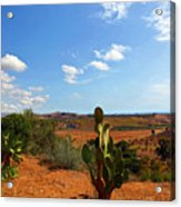 Where The Cactus Grow Acrylic Print