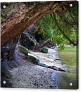 Where The Forest Meets The Sea Acrylic Print