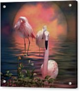 Where The Wild Flamingo Grow Acrylic Print