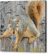 Where's The Nuts? Acrylic Print
