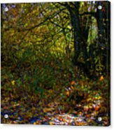 Where's The Trail Acrylic Print