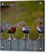 Which Way Acrylic Print