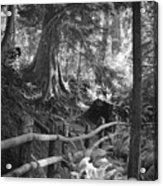 Whidbey Island Trail Head Acrylic Print