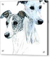 Whippet Pair Acrylic Print
