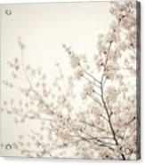 Whisper - Spring Blossoms - Central Park Acrylic Print
