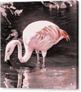 Whisper Pink Flamingo Acrylic Print