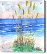 Whispering Sea Oats Acrylic Print