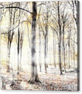 Whispering Woodland In Autumn Fall Acrylic Print