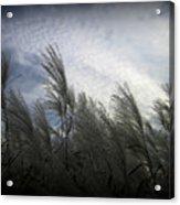 Whispers In The Wind Acrylic Print by Trina Prenzi