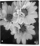 Whispers Of Beauty Acrylic Print