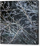 Whispers Of Winter Acrylic Print