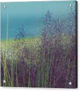 Whispy Field Acrylic Print