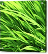 Whistle The Grass Acrylic Print