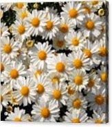 White An Yellow Acrylic Print