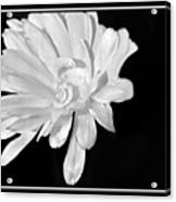 White And Black Flower Painting Acrylic Print